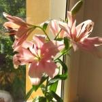 Diese Blüte gabs auch noch zum Muttertag