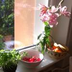 Gunis Küchenfensterbrett in der Frühlingssonne