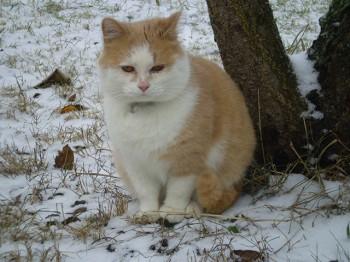 Das ist Olivias Katze Pombär