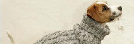 Hundepullis selber stricken Rolli1 - schoenstricken