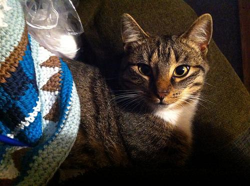 Katze mit cal Tasche von . schoenstricken.de