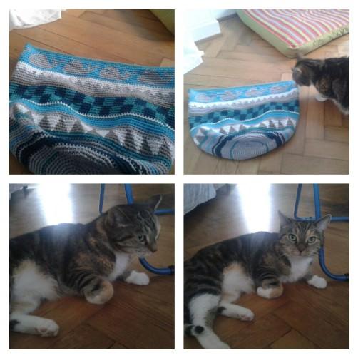 meine Katze posed nicht mit knitalong tasche von schoenstricken.de